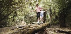 Bushwalking track maintenance – Lerderderg Track