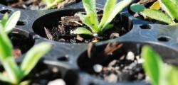 mt leura plants