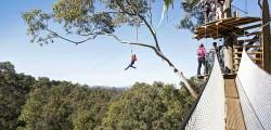 tree-top-adventure Sydney
