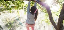 Nature Play_Tree