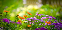 Flowers-Garden-Wallpaper