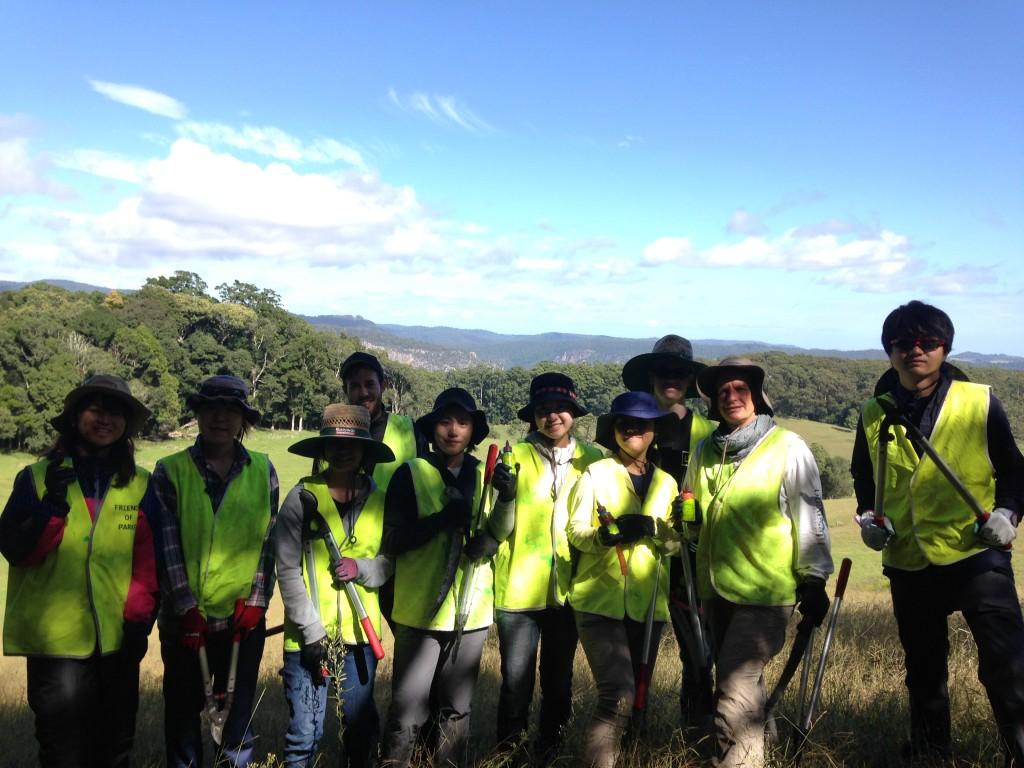volunteering to improve the sand dunes around barwon heads